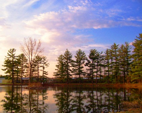 sunset on pond and trees