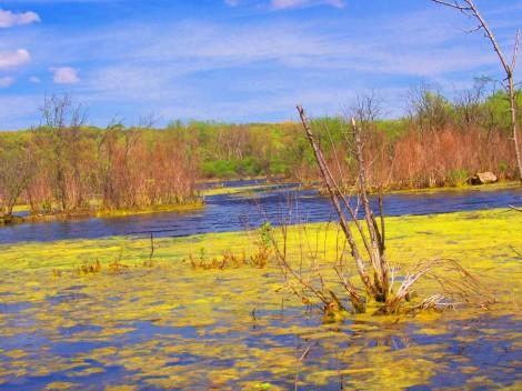 marsh and swamp
