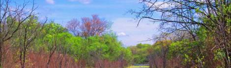 Midwest wetlands