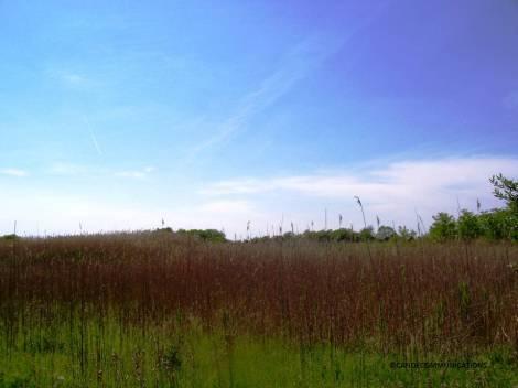 prairie and blue sky