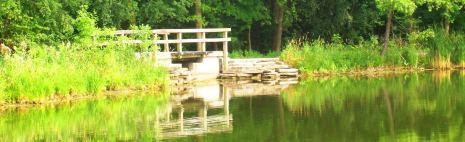 cropped lake