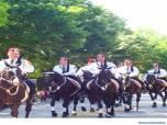 black horses in parade