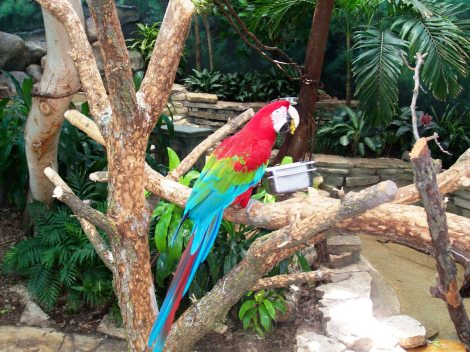 parrot at the zoo