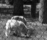 black and white wolves photograph