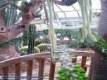 Oak Park Conservatory plants
