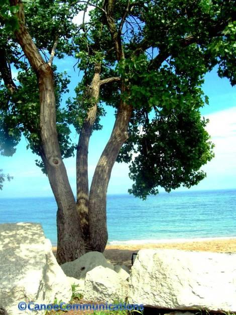 white rocks and tree