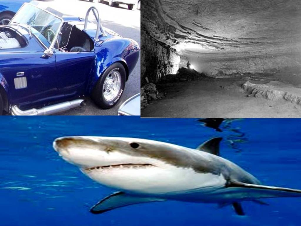shark jobs