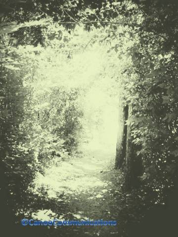 green forest path