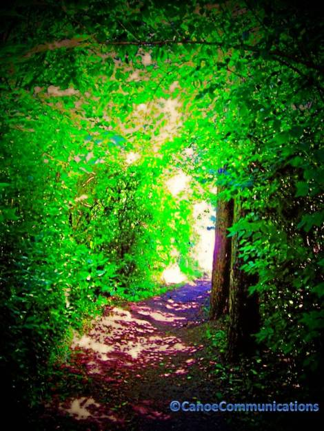 green wooded path