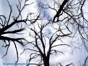 Swaying Trees