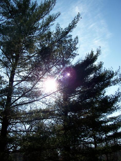 sunlight in trees