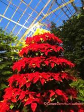 Wilder Park Conservatory tree