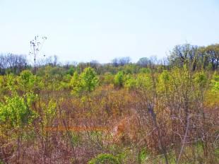 northwest Indiana prairie