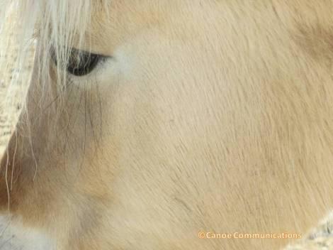 pony profile
