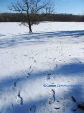winter footprints