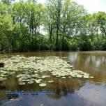 woodlands lake