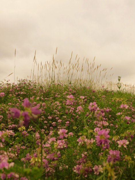 wildflower prairie dusk