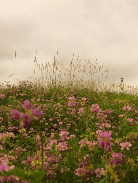 wildflower prairie dusk