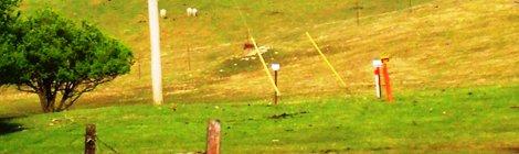 ewe and lambs