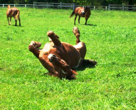 horse in wet grass