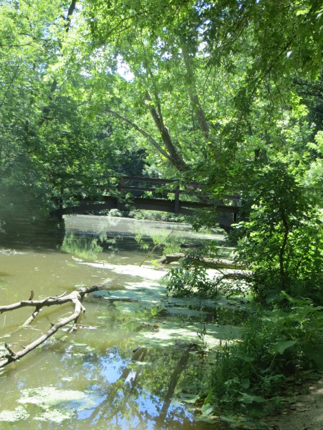 forest bridge and muddy waters