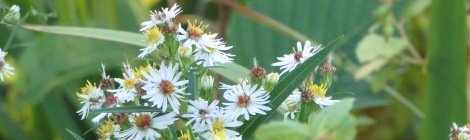 fall wildflowers and bee