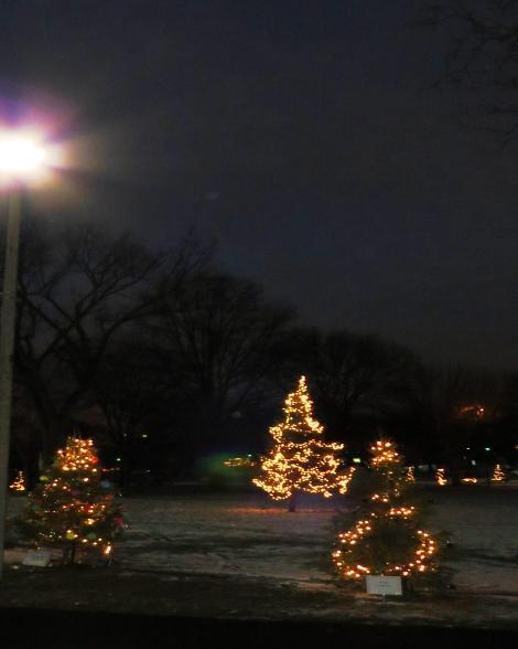 decorated fir trees in a park