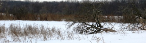 winter wetlands