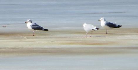 gulls sunbathe