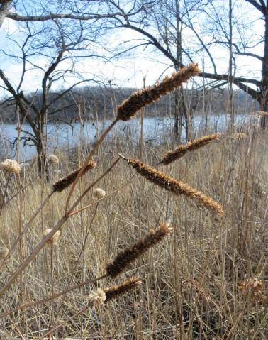 early spring prairie