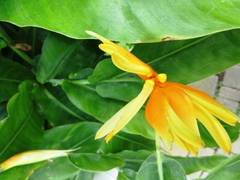 tropical orange and green plant