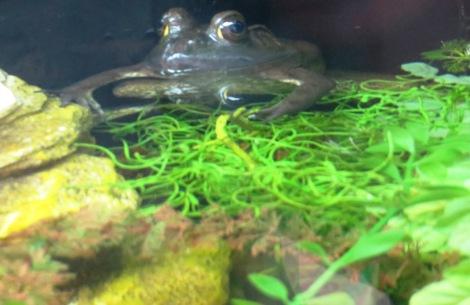 spring amphibian