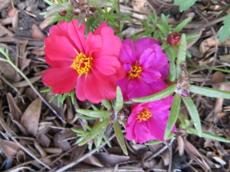 colorful pink flowers