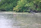 rainfall on wetlands