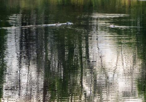 dappled sunlight on lake