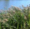 tall grass and breeze