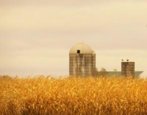 corn field and grain silos