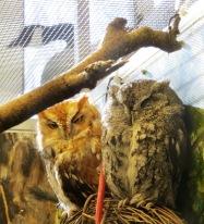 owl, owl, goose