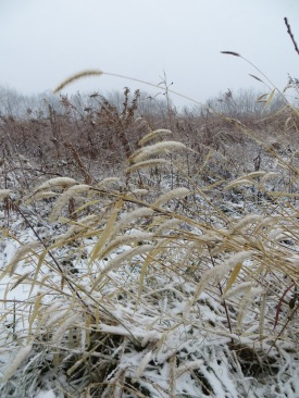 winter prairie