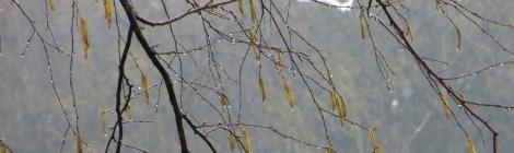 rainy day as bird soars