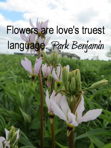 Flowers are love's truest language. Park Benjamin