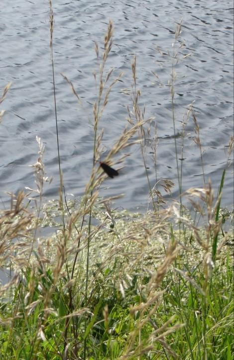 moth on tall grass