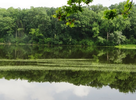 forest watery reflection