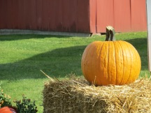 pumpkin and hay