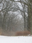 stormy winter day