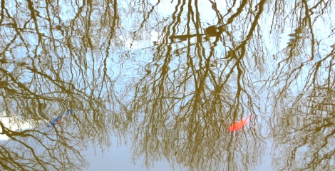 fish in pond with reflective tree branches