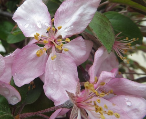 flowering tree with pink blooms