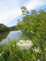 prairie wildflowers by creek