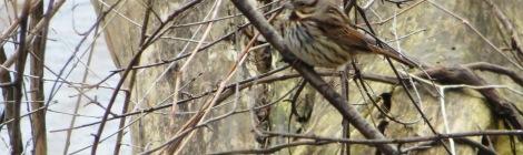 bird among branches