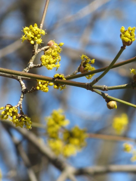 buds on trees